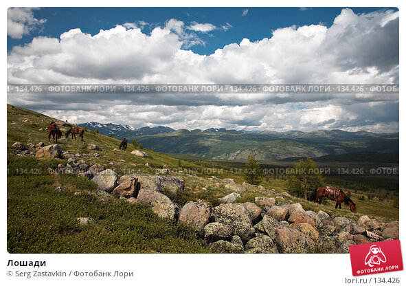 Купить «Лошади», фото № 134426, снято 30 июня 2006 г. (c) Serg Zastavkin / Фотобанк Лори