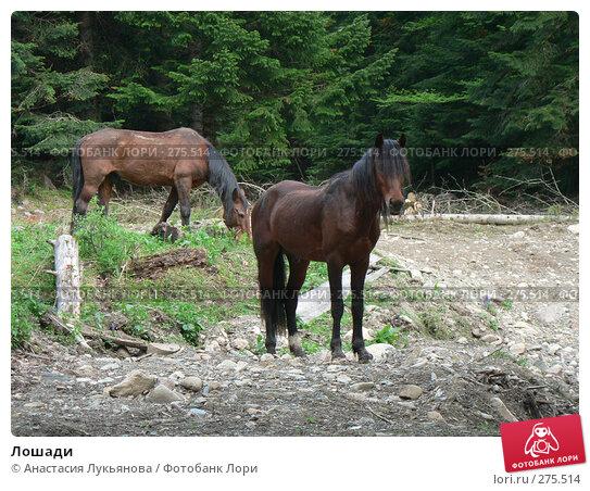 Купить «Лошади», фото № 275514, снято 5 мая 2006 г. (c) Анастасия Лукьянова / Фотобанк Лори