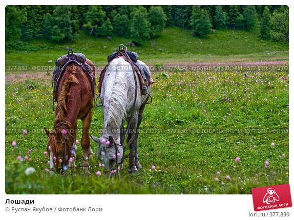Купить «Лошади», фото № 377830, снято 1 июля 2008 г. (c) Руслан Якубов / Фотобанк Лори
