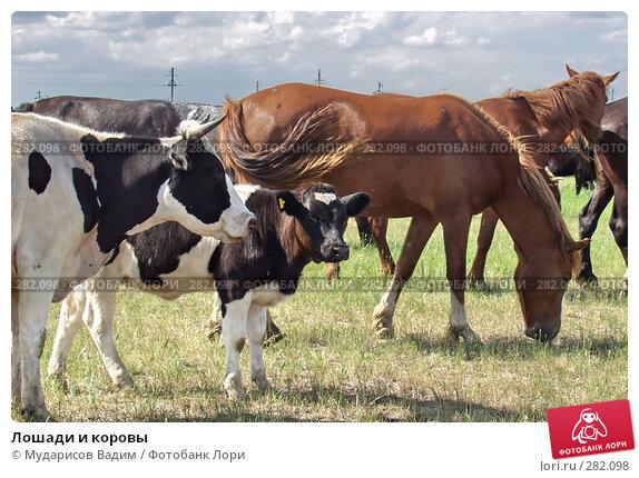 Лошади и коровы, фото № 282098, снято 28 июля 2017 г. (c) Мударисов Вадим / Фотобанк Лори