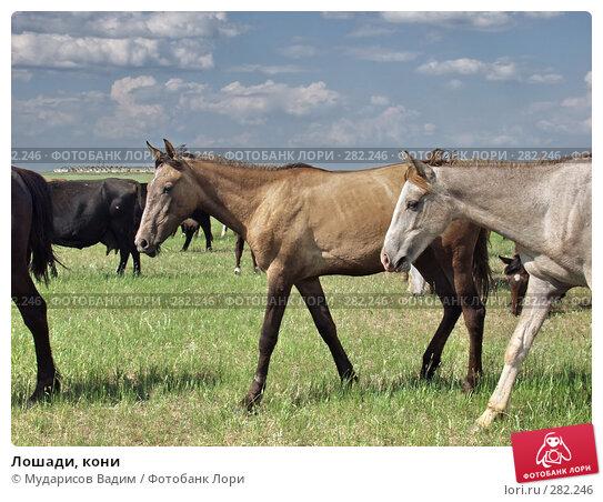 Лошади, кони, фото № 282246, снято 23 мая 2017 г. (c) Мударисов Вадим / Фотобанк Лори