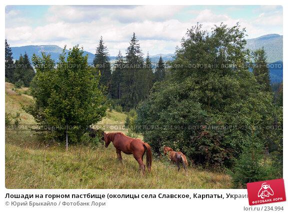 Купить «Лошади на горном пастбище (околицы села Славское, Карпаты, Украина)», фото № 234994, снято 2 сентября 2007 г. (c) Юрий Брыкайло / Фотобанк Лори