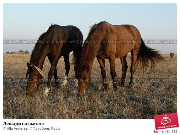 Лошади на выгоне, фото № 81538, снято 26 сентября 2006 г. (c) Alla Andersen / Фотобанк Лори