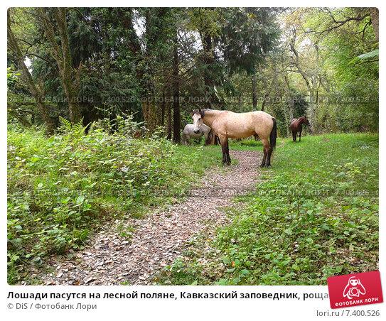 Лошади пасутся на лесной поляне, Кавказский заповедник, роща пробкового дерева, фото № 7400526, снято 6 мая 2015 г. (c) DiS / Фотобанк Лори