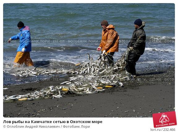 Лов рыбы на Камчатке сетью в Охотском море, фото № 232466, снято 15 августа 2004 г. (c) Оглоблин Андрей Николаевич / Фотобанк Лори