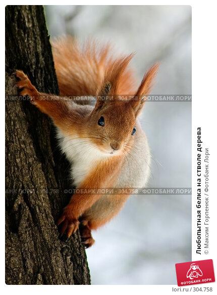 Любопытная белка на стволе дерева, фото № 304758, снято 28 марта 2005 г. (c) Максим Горпенюк / Фотобанк Лори