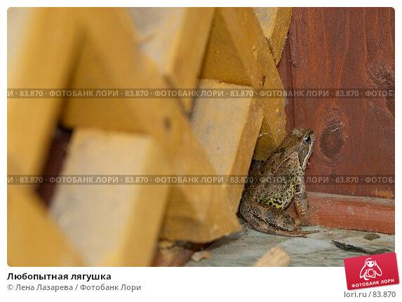 Любопытная лягушка, фото № 83870, снято 3 сентября 2007 г. (c) Лена Лазарева / Фотобанк Лори