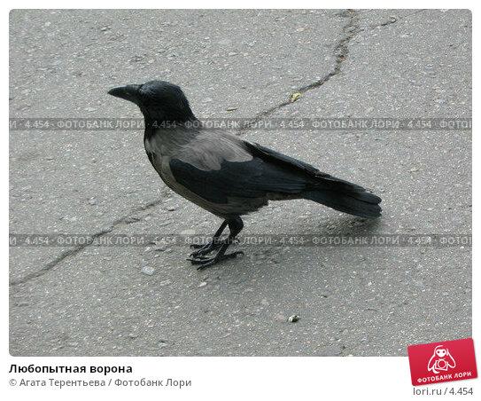 Любопытная ворона, фото № 4454, снято 21 мая 2006 г. (c) Агата Терентьева / Фотобанк Лори