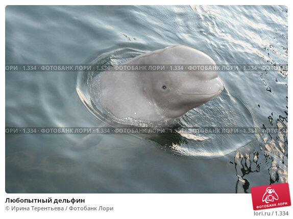 Любопытный дельфин, эксклюзивное фото № 1334, снято 15 сентября 2005 г. (c) Ирина Терентьева / Фотобанк Лори