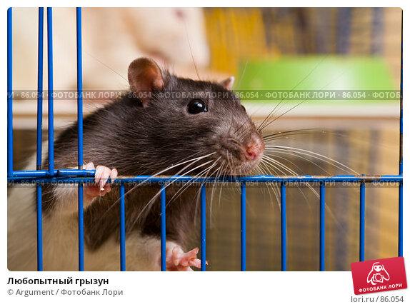 Любопытный грызун, фото № 86054, снято 18 сентября 2007 г. (c) Argument / Фотобанк Лори