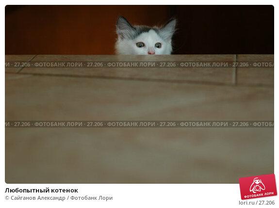 Любопытный котенок, фото № 27206, снято 24 июня 2006 г. (c) Сайганов Александр / Фотобанк Лори