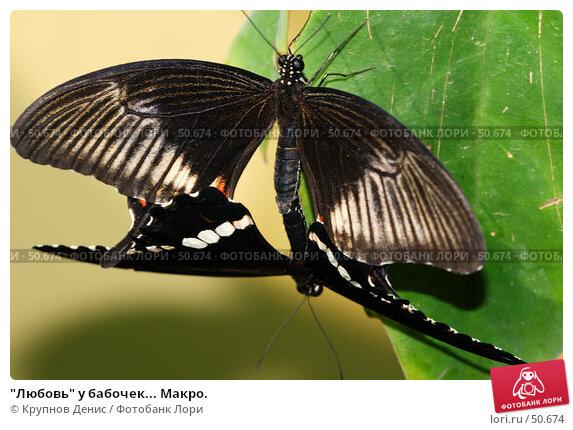"""""""Любовь"""" у бабочек... Макро., фото № 50674, снято 7 мая 2007 г. (c) Крупнов Денис / Фотобанк Лори"""