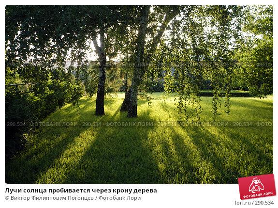 Лучи солнца пробивается через крону дерева, фото № 290534, снято 24 мая 2005 г. (c) Виктор Филиппович Погонцев / Фотобанк Лори