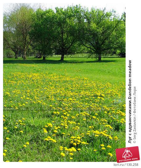 Луг с одуванчиками.Dandelion meadow, фото № 130258, снято 20 мая 2005 г. (c) Serg Zastavkin / Фотобанк Лори