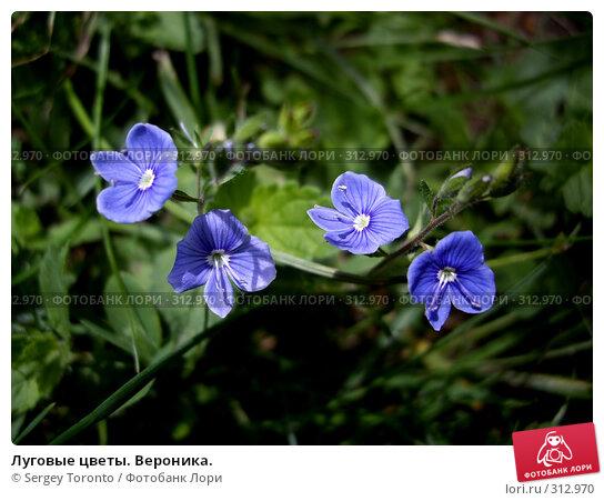 Луговые цветы. Вероника., фото № 312970, снято 11 июня 2007 г. (c) Sergey Toronto / Фотобанк Лори