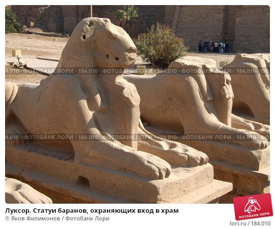 Луксор. Статуи баранов, охраняющих вход в храм, фото № 184010, снято 15 января 2008 г. (c) Яков Филимонов / Фотобанк Лори