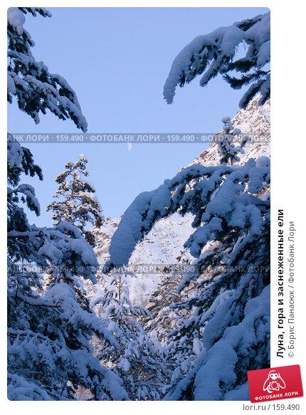 Луна, гора и заснеженные ели, фото № 159490, снято 15 декабря 2007 г. (c) Борис Панасюк / Фотобанк Лори