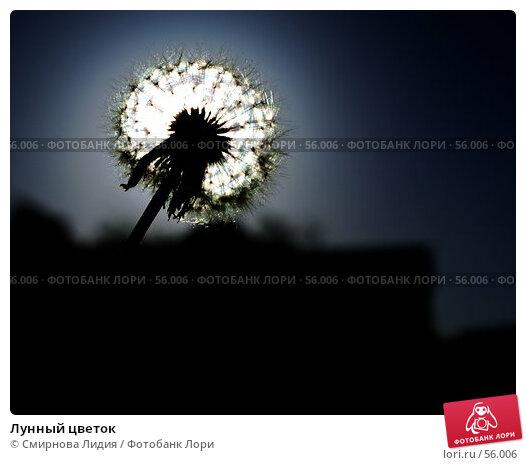 Лунный цветок, фото № 56006, снято 2 июня 2007 г. (c) Смирнова Лидия / Фотобанк Лори