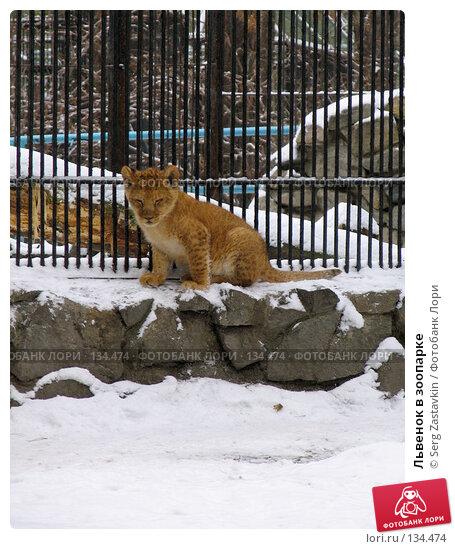 Львенок в зоопарке, фото № 134474, снято 7 ноября 2004 г. (c) Serg Zastavkin / Фотобанк Лори