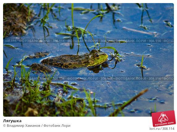 Лягушка, фото № 308114, снято 2 июня 2008 г. (c) Владимир Хаманов / Фотобанк Лори