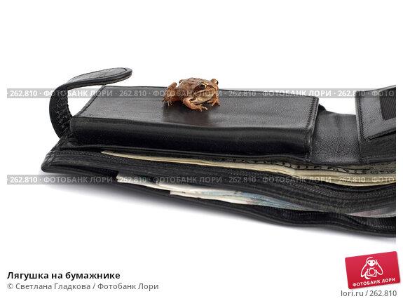 Лягушка на бумажнике, фото № 262810, снято 7 июля 2007 г. (c) Cветлана Гладкова / Фотобанк Лори