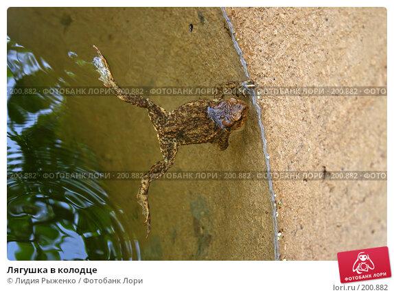 Лягушка в колодце, фото № 200882, снято 5 августа 2007 г. (c) Лидия Рыженко / Фотобанк Лори