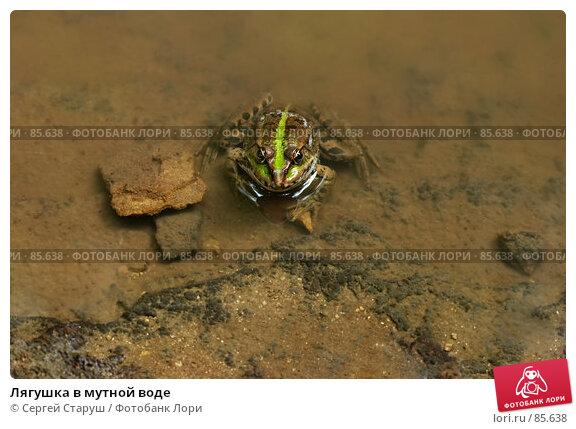 Купить «Лягушка в мутной воде», фото № 85638, снято 25 августа 2007 г. (c) Сергей Старуш / Фотобанк Лори