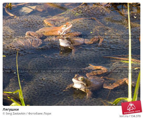 Лягушки, фото № 134370, снято 14 мая 2004 г. (c) Serg Zastavkin / Фотобанк Лори