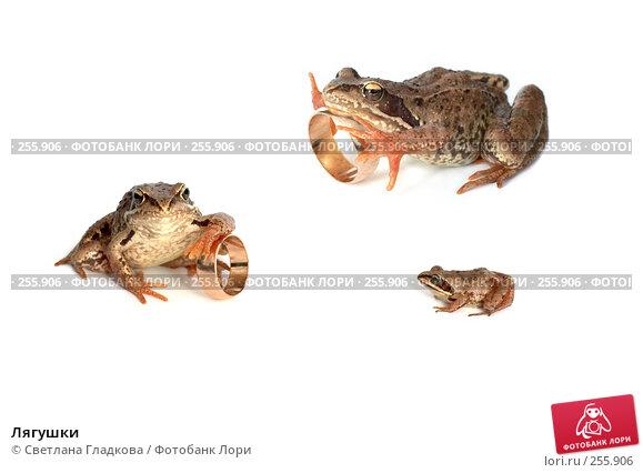 Лягушки, фото № 255906, снято 7 июля 2007 г. (c) Cветлана Гладкова / Фотобанк Лори