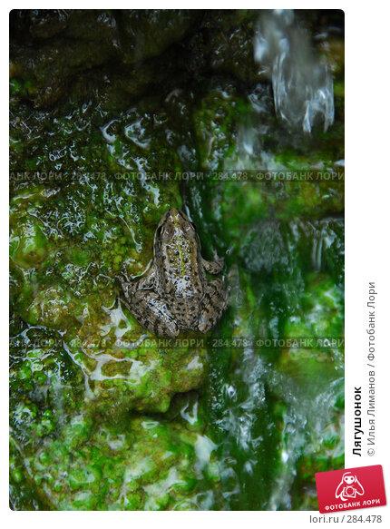 Лягушонок, фото № 284478, снято 2 мая 2008 г. (c) Илья Лиманов / Фотобанк Лори