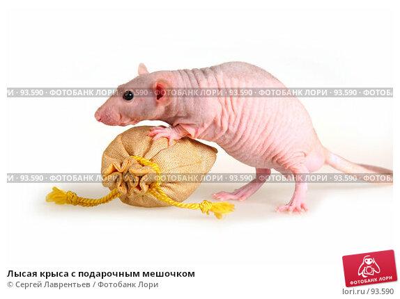 Лысая крыса с подарочным мешочком, фото № 93590, снято 23 сентября 2007 г. (c) Сергей Лаврентьев / Фотобанк Лори