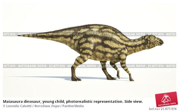Купить «Maiasaura dinosaur, young child, photorealistic representation. Side view.», иллюстрация № 21877974 (c) PantherMedia / Фотобанк Лори