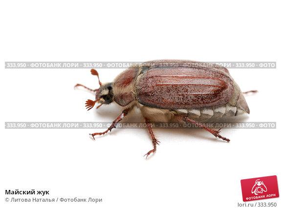 Майский жук, фото № 333950, снято 1 июня 2008 г. (c) Литова Наталья / Фотобанк Лори