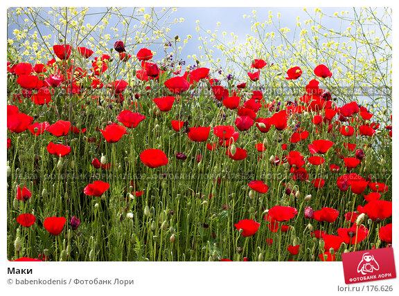 Маки, фото № 176626, снято 2 мая 2006 г. (c) Бабенко Денис Юрьевич / Фотобанк Лори
