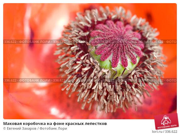 Купить «Маковая коробочка на фоне красных лепестков», фото № 336622, снято 21 июня 2008 г. (c) Евгений Захаров / Фотобанк Лори