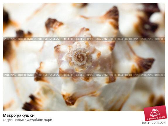 Макро ракушки, фото № 204226, снято 17 февраля 2008 г. (c) Ерин Илья / Фотобанк Лори