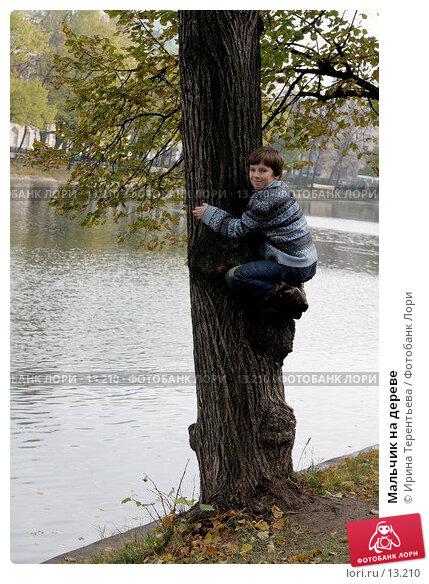 Мальчик на дереве, эксклюзивное фото № 13210, снято 22 октября 2006 г. (c) Ирина Терентьева / Фотобанк Лори