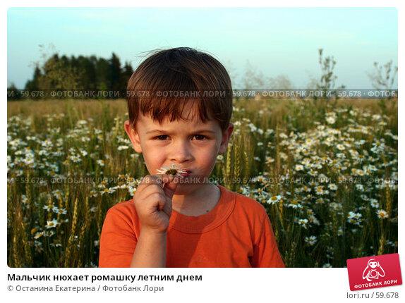 Мальчик нюхает ромашку летним днем, фото № 59678, снято 7 июля 2007 г. (c) Останина Екатерина / Фотобанк Лори