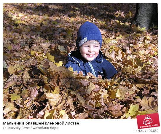 Мальчик в опавшей кленовой листве, фото № 120850, снято 9 октября 2005 г. (c) Losevsky Pavel / Фотобанк Лори