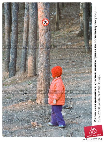 """Купить «Маленькая девочка в красной шапке гуляет по сосновому лесу под знаком """"проход запрещен""""», фото № 267134, снято 1 мая 2006 г. (c) Дмитрий Боков / Фотобанк Лори"""