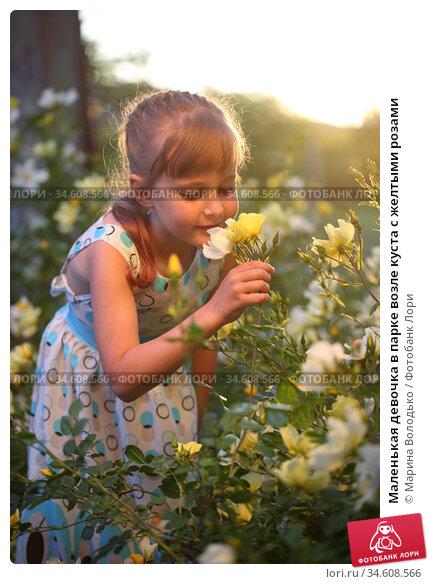Маленькая девочка в парке возле куста с желтыми розами. Стоковое фото, фотограф Марина Володько / Фотобанк Лори