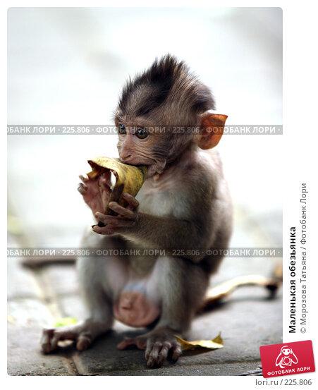Купить «Маленькая обезьянка», фото № 225806, снято 24 февраля 2008 г. (c) Морозова Татьяна / Фотобанк Лори