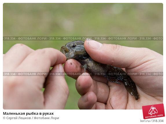 Маленькая рыбка в руках, фото № 318334, снято 18 мая 2008 г. (c) Сергей Лешков / Фотобанк Лори