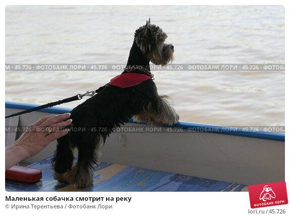 Маленькая собачка смотрит на реку, эксклюзивное фото № 45726, снято 20 мая 2007 г. (c) Ирина Терентьева / Фотобанк Лори