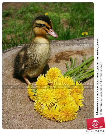 Маленькая утка и желтые цветы летним днем, фото № 54034, снято 26 мая 2007 г. (c) Останина Екатерина / Фотобанк Лори