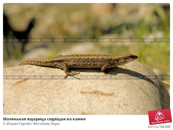 Маленькая ящерица сидящая на камне, фото № 68690, снято 12 июня 2007 г. (c) Ильин Сергей / Фотобанк Лори