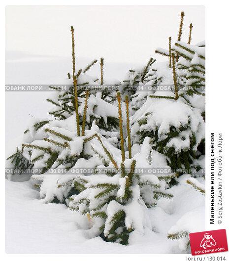Маленькие ели под снегом, фото № 130014, снято 23 марта 2005 г. (c) Serg Zastavkin / Фотобанк Лори