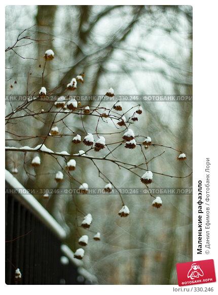 Маленькие рафаэлло, фото № 330246, снято 2 февраля 2008 г. (c) Данил Ефимов / Фотобанк Лори