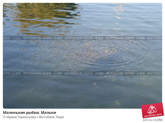 Купить «Маленькие рыбки. Мальки », эксклюзивное фото № 6050, снято 21 сентября 2005 г. (c) Ирина Терентьева / Фотобанк Лори