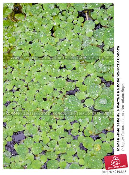 Маленькие зеленые листья на поверхности болота, фото № 219818, снято 1 марта 2008 г. (c) Вадим Пономаренко / Фотобанк Лори